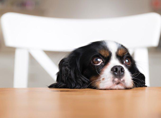 regard d'un chien qui demande