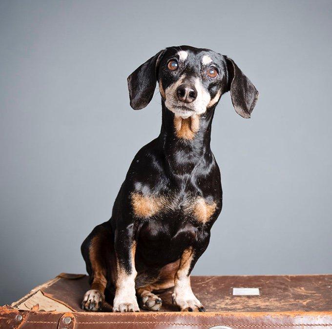 photographie d'un chien