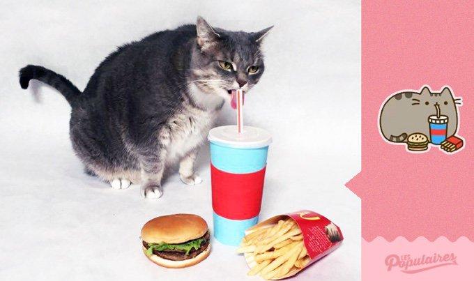 Pusheen le chat en vrai