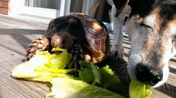 histoire d'amitié entre un chien borgne et une tortue