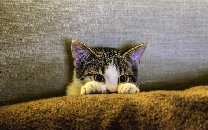 chat apeuré devant la télévision le 14 juillet