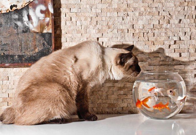 chat qui regarde des poissons le 14 juillet