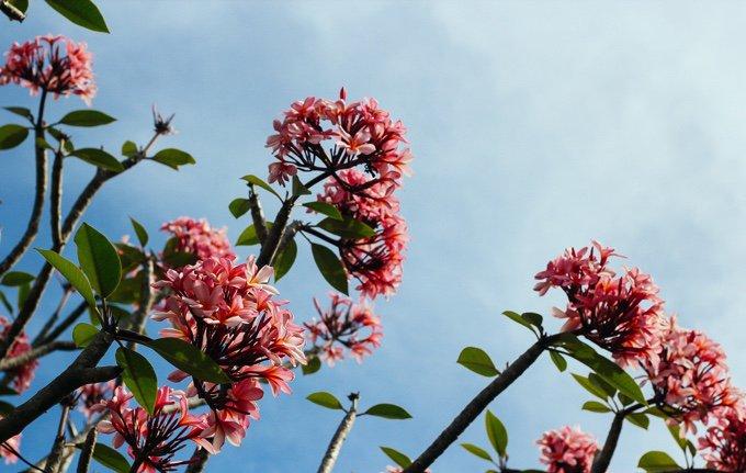 fleurs remède de bach 14 juillet