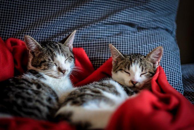 chats qui dorment dans un lit le 14 juillet