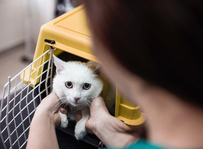 chat dans sa cage chez le vétérinaire le 14 juillet