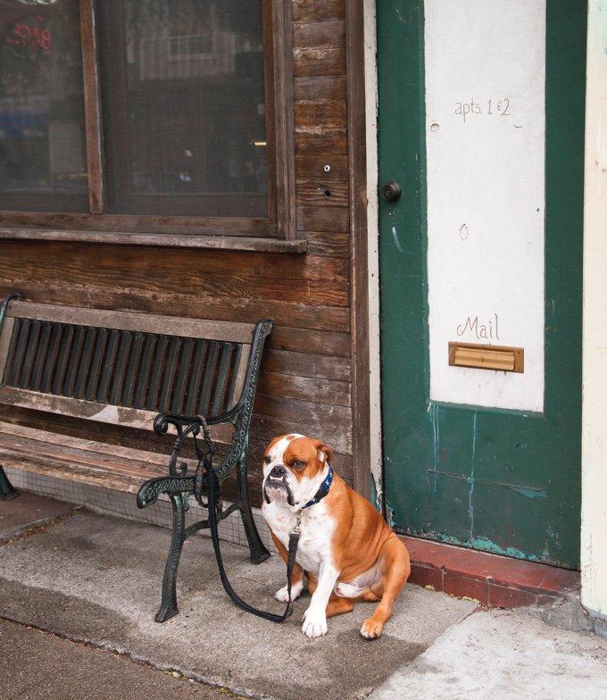 chien attaché à un banc dans la rue