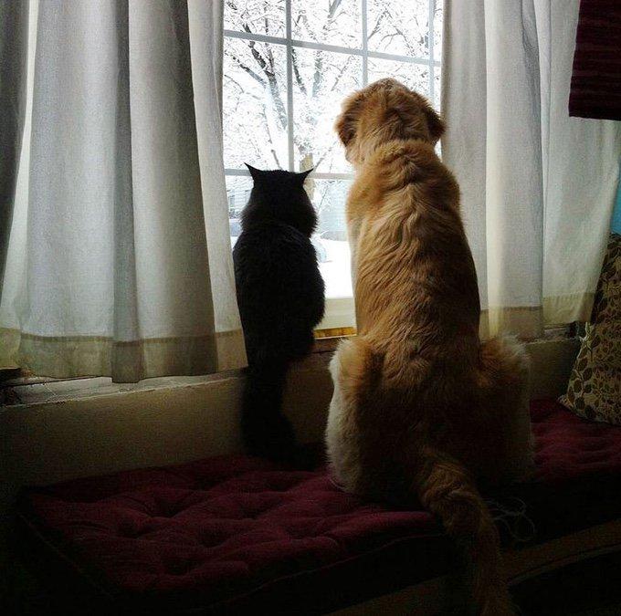 chien et chat regardant ensembles par la fenêtre