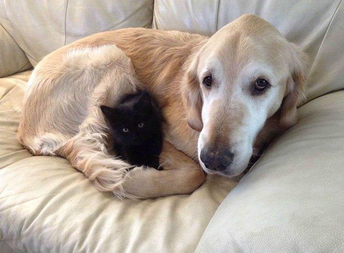 chien et chat noir sur un canapé