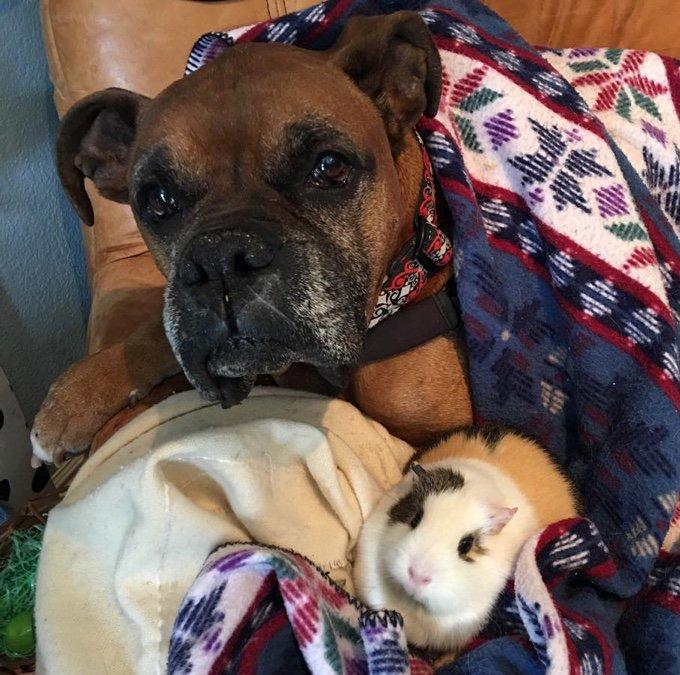 un chien et son cochon dinde sur le canapé