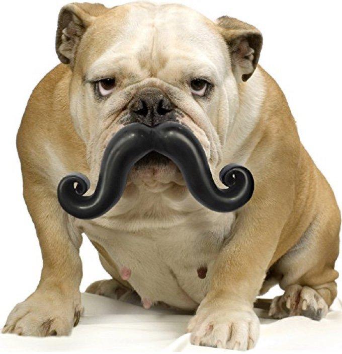chien avec une balle moustache