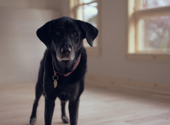 vieux chien noir avec un regard triste