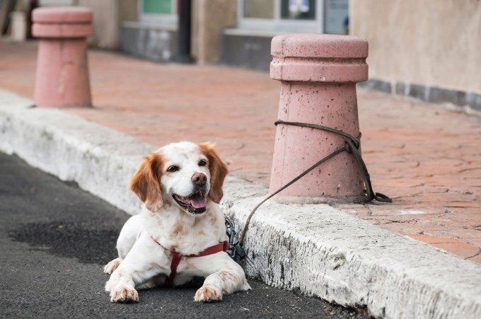 chien attaché à un poteau dans la rue