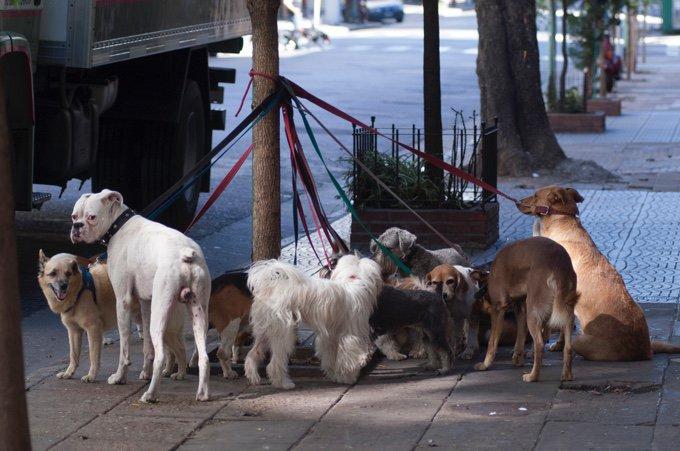chiens attachés à un poteau dans la rue