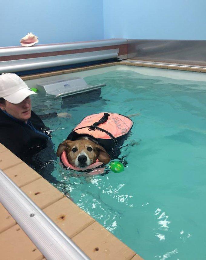 Kale Chips le chien obèse à la piscine
