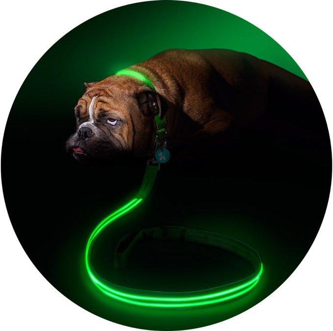 Laisse et collier pour chien fluorescents
