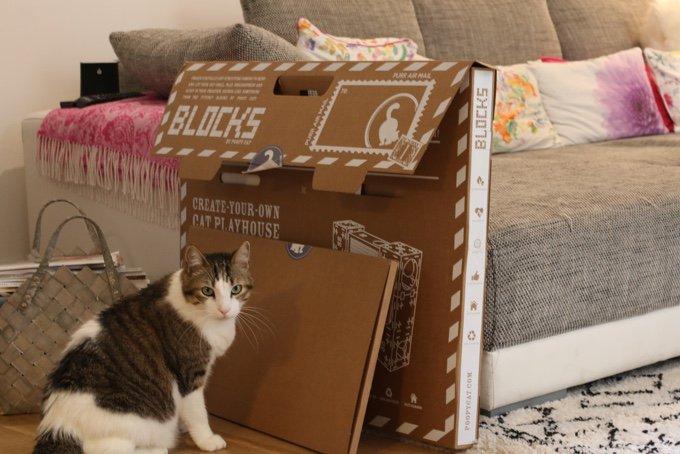 Léo dans une maison de jeu en carton blocks de pope cat