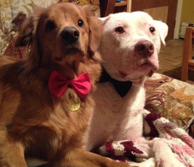 deux chiens avec des noeuds papillons
