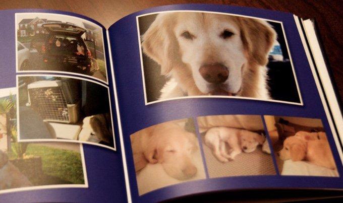 photobook chien