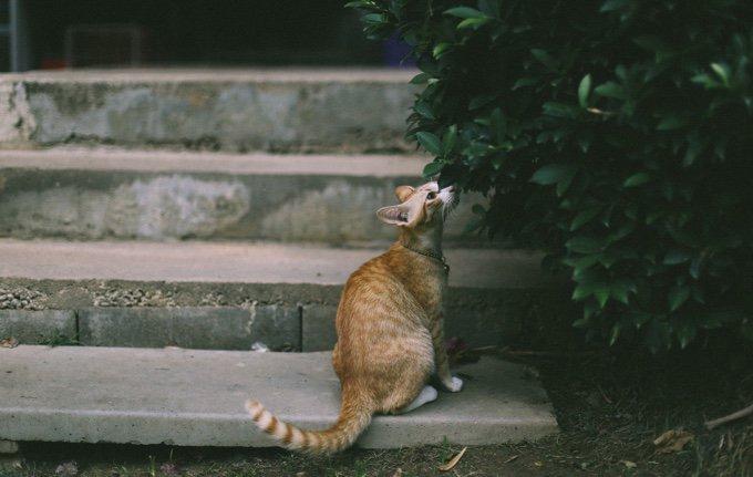 10 astuces pour aider votre chat à rester au frais cet été