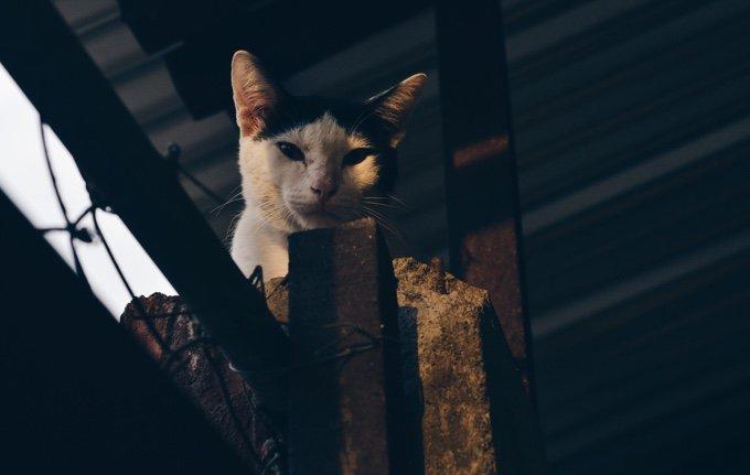 habituer votre chat à vivre en intérieur