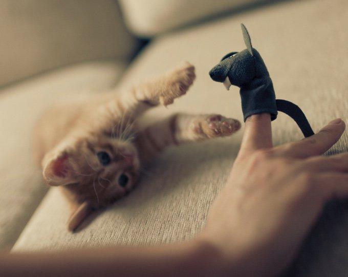 chat qui joue avec son propriétaire