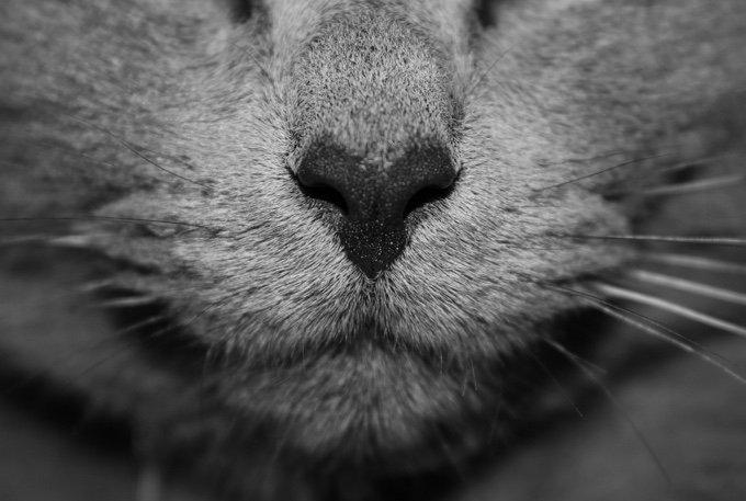 photo macro d'un museau de chat