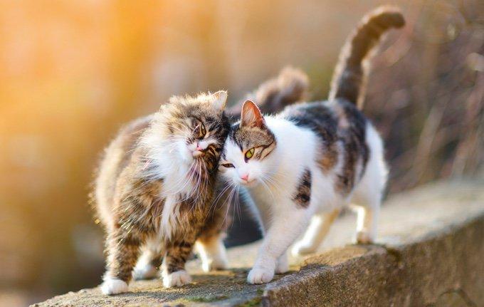 chats qui se frottent sur un mur