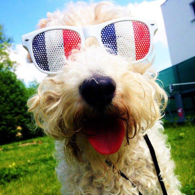 chien lunettes euro 2016
