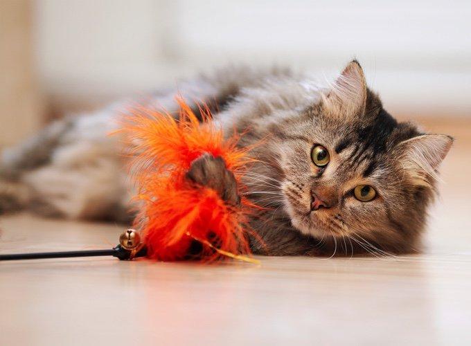 chat qui joue avec une plume