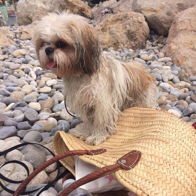loocky plage chien
