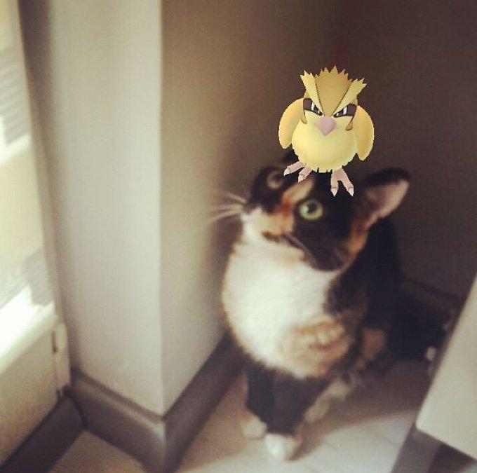 gato viendo a un pokémon