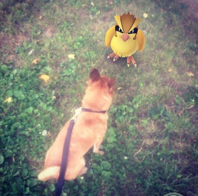 perro viendo a un pokémon