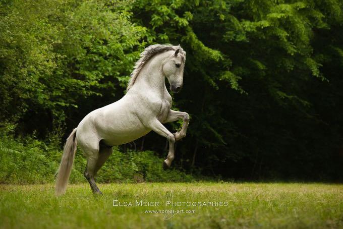 cheval blanc elsa meier
