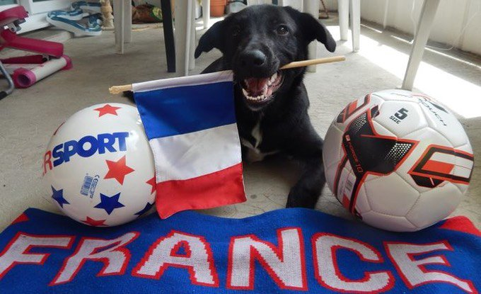 chien france euro 2016