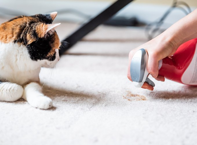 8-tips-eliminate-pet-smells-fur-nados-chewing-2019