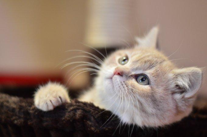 chat me masse avec ses pattes
