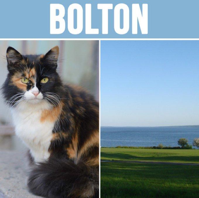 bolton-05-2016