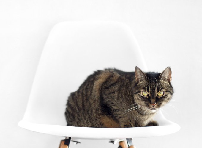 Présenter son nouveau chat à son ancien chat