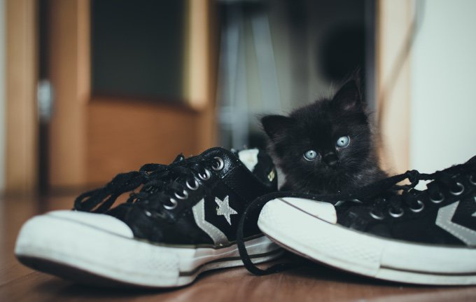 chat-chaussures-05-2016