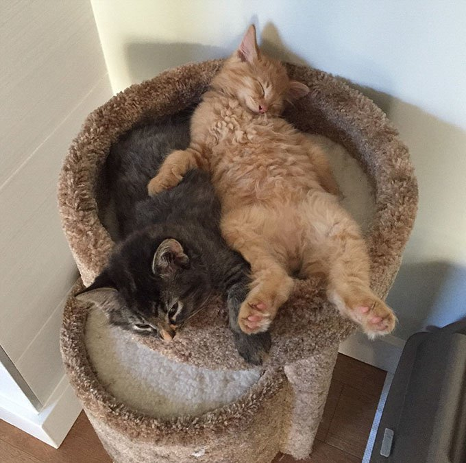 Deux chats qui dorment tout le temps ensemble