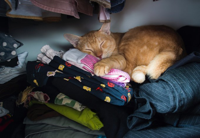 gato duerme sobre la ropa