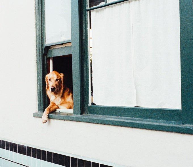chien association