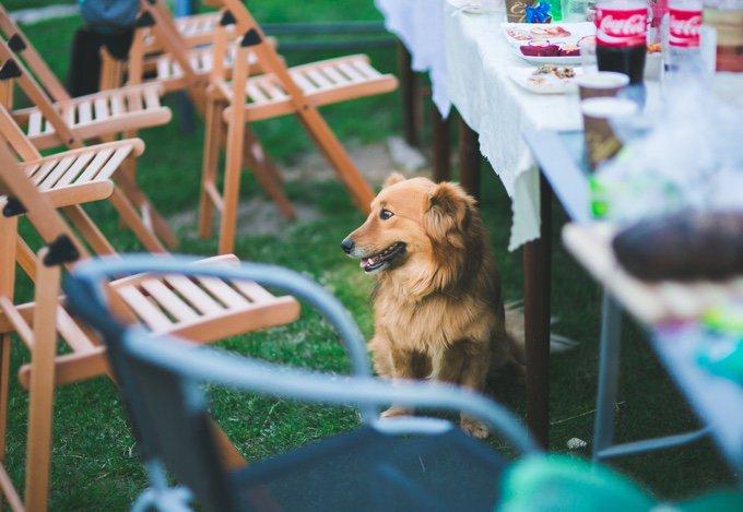 chien sous la table