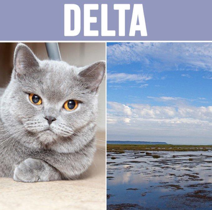 delta-05-2016
