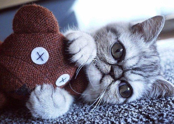 Herman, un chaton doux et drôle