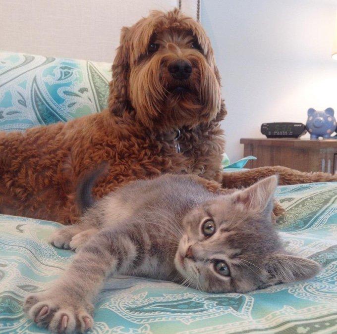 koda et jessie dans le lit