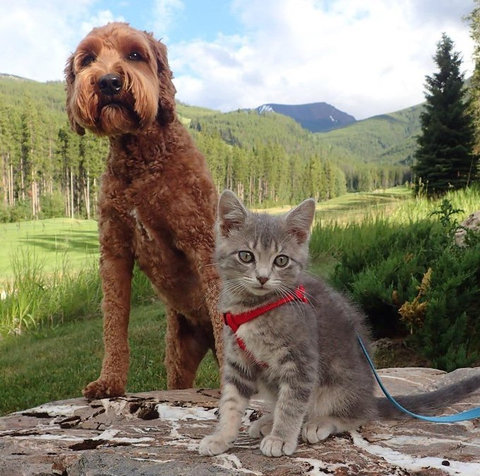 koda y jessie en la montaña
