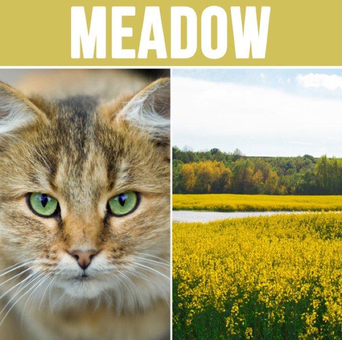 meadow-05-2016