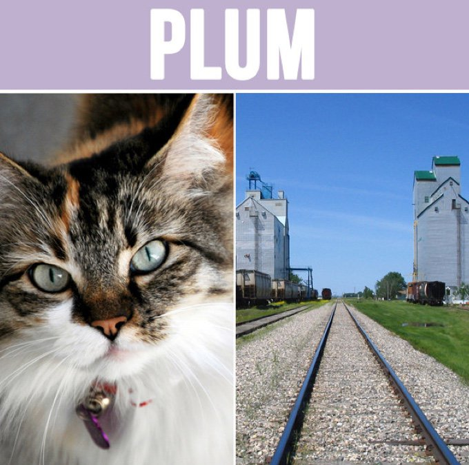 plum-05-2016