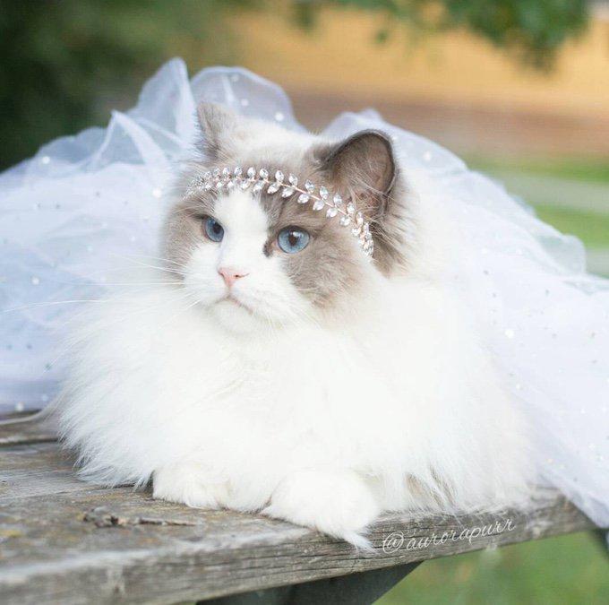 Princesse Aurora